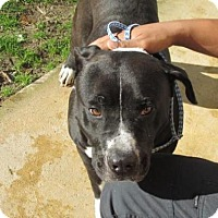 Adopt A Pet :: Abraham - Rocky Mount, NC