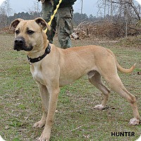Adopt A Pet :: Hunter - Washington, GA