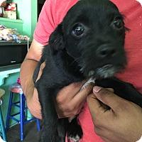 Adopt A Pet :: Bein - Phoenix, AZ