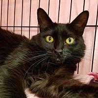 Adopt A Pet :: Holly Holm - Albuquerque, NM
