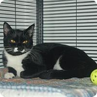 Adopt A Pet :: Catfish - Bradenton, FL