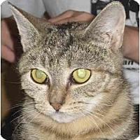 Adopt A Pet :: Nebish - Jenkintown, PA
