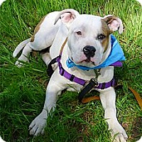 Adopt A Pet :: Una so sweet - Sacramento, CA