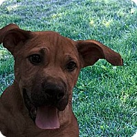 Adopt A Pet :: Sinclair - Adopted! - Antioch, IL