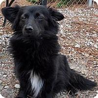 Adopt A Pet :: Lexy - Athens, GA