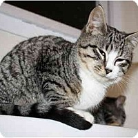 Adopt A Pet :: Taz - Davis, CA
