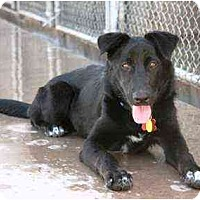 Adopt A Pet :: Angelica - Scottsdale, AZ