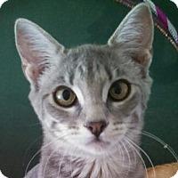 Adopt A Pet :: Minnie - Winchester, CA