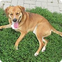 Adopt A Pet :: Chopper - Lake Odessa, MI