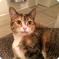 Adopt A Pet :: Pedra - Troy, OH
