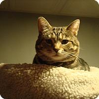 Adopt A Pet :: MoMo - Muncie, IN
