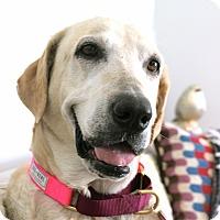 Adopt A Pet :: Billy Mama - Los Angeles, CA