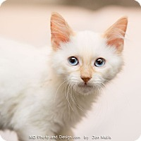 Adopt A Pet :: Alfie - Fountain Hills, AZ
