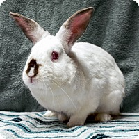 Adopt A Pet :: Axel - Fountain Valley, CA