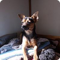 Adopt A Pet :: Lobo - Crawfordville, FL