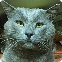 Adopt A Pet :: Mouse - LaJolla, CA