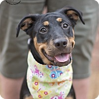 Adopt A Pet :: Sasha - Kingwood, TX