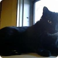 Adopt A Pet :: Jonas - Berkeley Hts, NJ