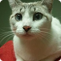 Adopt A Pet :: Chloe - Titusville, FL