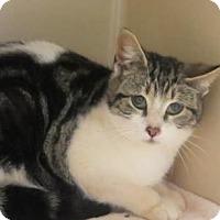 Adopt A Pet :: Hall  $20 - Lincolnton, NC