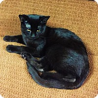 Adopt A Pet :: Daenerys (Bonded to Shay) - Richmond Hill, ON