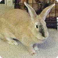 Adopt A Pet :: Thumper - Hadley, MI