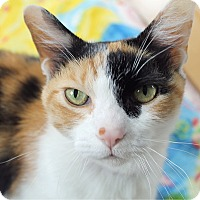 Adopt A Pet :: Jilly Bean - Chicago, IL