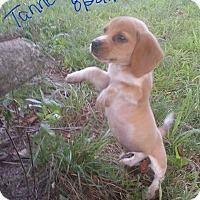 Adopt A Pet :: Tanner - Allentown, PA