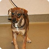 Adopt A Pet :: Bella - Wildomar, CA