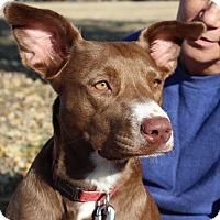 Adopt A Pet :: Leslie - Owasso, OK