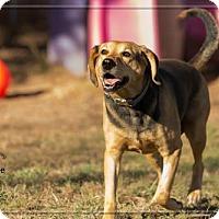 Adopt A Pet :: Banjo - Ashland, WI