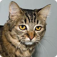 Adopt A Pet :: Cindy - Prescott, AZ