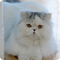Adopt A Pet :: Jasper - Davis, CA
