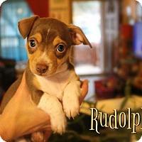 Adopt A Pet :: Rudolph - Benton, LA