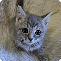 Adopt A Pet :: Colt - Michigan City, IN