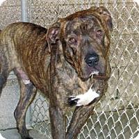 Adopt A Pet :: Grendel - Ruidoso, NM