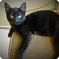 Adopt A Pet :: Merlin - Mankato, MN