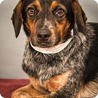 Adopt A Pet :: Linus - Berkeley Heights, NJ