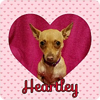 Adopt A Pet :: Heartley - Houston, TX