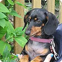 Adopt A Pet :: CONNOR - Portland, OR