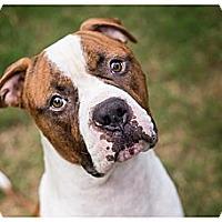 Adopt A Pet :: Maxwell - Santee, CA