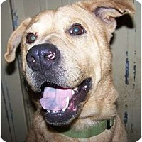 Adopt A Pet :: Bailey - FANTASTIC FAMILY DOG! - Antioch, IL