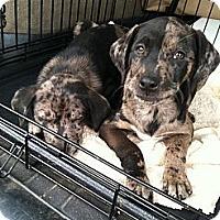 Adopt A Pet :: Eva - Richmond, VA