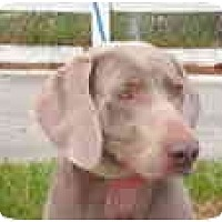 Adopt A Pet :: Zues - Eustis, FL
