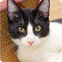 Adopt A Pet :: Bossanova - Scottsdale, AZ