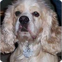 Adopt A Pet :: Cha Cha - Sugarland, TX