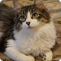 Adopt A Pet :: Mishka - St. Louis, MO