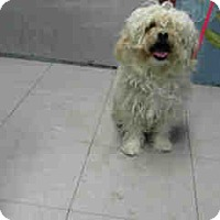 Adopt A Pet :: Stella - Simi Valley, CA