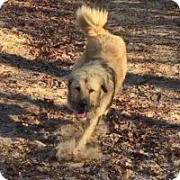 Adopt A Pet :: ARKANSAS, LITTLE ROCK; ADOPTION PENDING - Little, Rock, AR