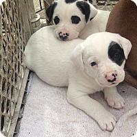 Adopt A Pet :: Panda & Pete - Daleville, AL